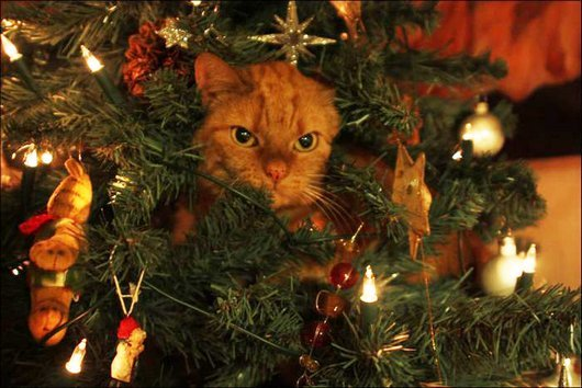 20 cats that love christmas trees funny cat photos cute6 73d16