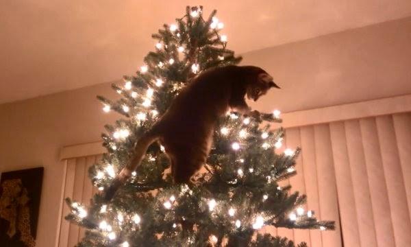 Cat Christmas Tree Disaster 570e9