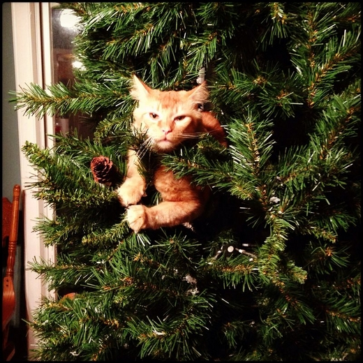 Cats in Christmas Trees.png full 07be8