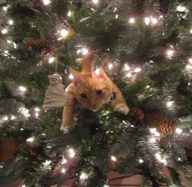 cat in christmas tree 1354919845 b e0ec2