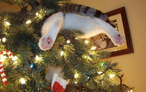 the world s top 10 best images of cats in christmas trees 8 67715