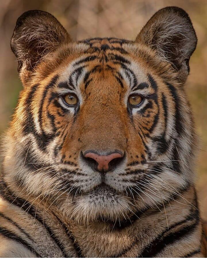 tigers woods 1.1 45320524 510407959479050 4516655831069515939 n