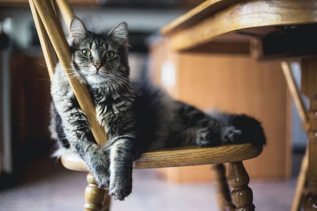worried cat2