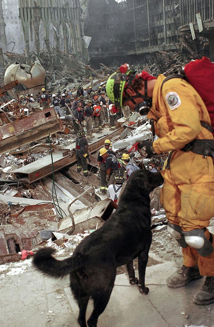 september 11 dogs