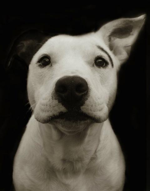 shelterdogs01_copy
