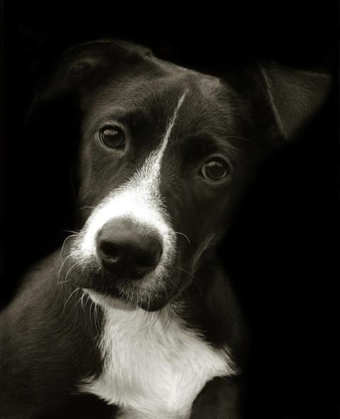 shelterdogs02
